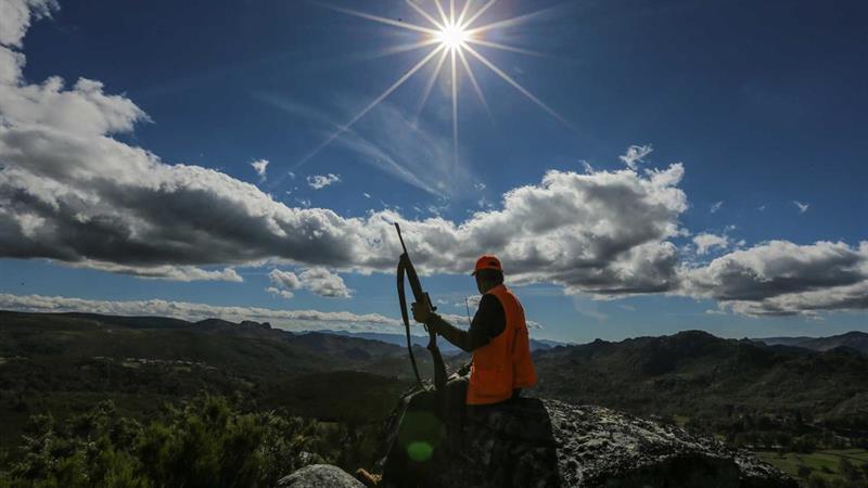 Caça à raposa: proprietários rurais e caçadores recusam proibição – Diário de Notícias
