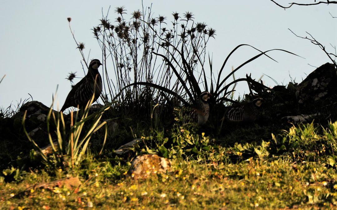 SEMINÁRIO SOBRE ALTERAÇÕES CLIMÁTICAS E CAÇA | ESTA QUARTA-FEIRA EM COIMBRA