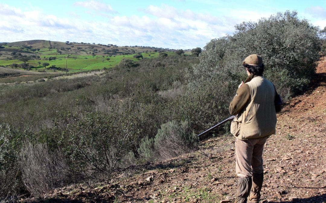 AR discute lei das armas com propostas para nova entrega voluntária e críticas dos caçadores – DN