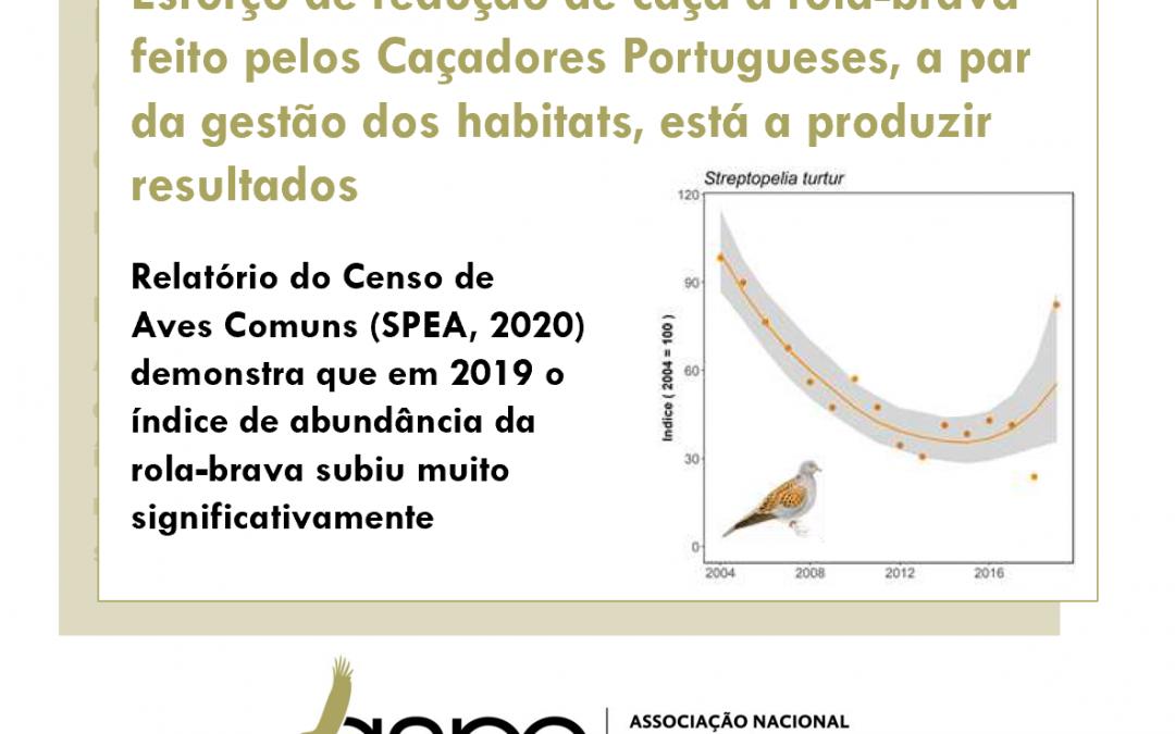 População de rola-brava dá sinais de recuperação. Esforço de redução drástica da caça feito em Portugal está a produzir efeitos